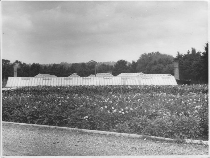 The Garden Beauty Products glasshouses | From the private collection of Mrs D Bilewycz