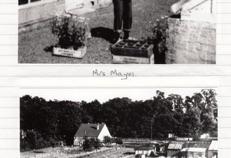 Mayes Nursery
