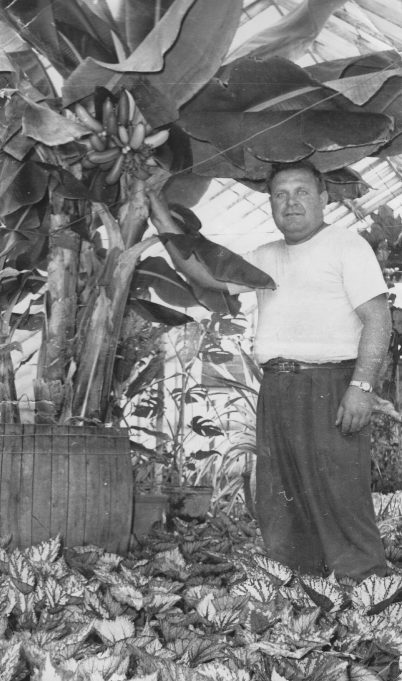 John Bilewycz and the banana tree | From the private collection of Mrs D Bilewycz