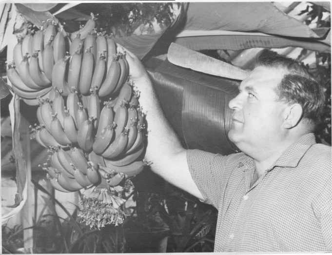 John Bilewycz with the ripening fruits | From the private collection of Mrs D Bilewycz