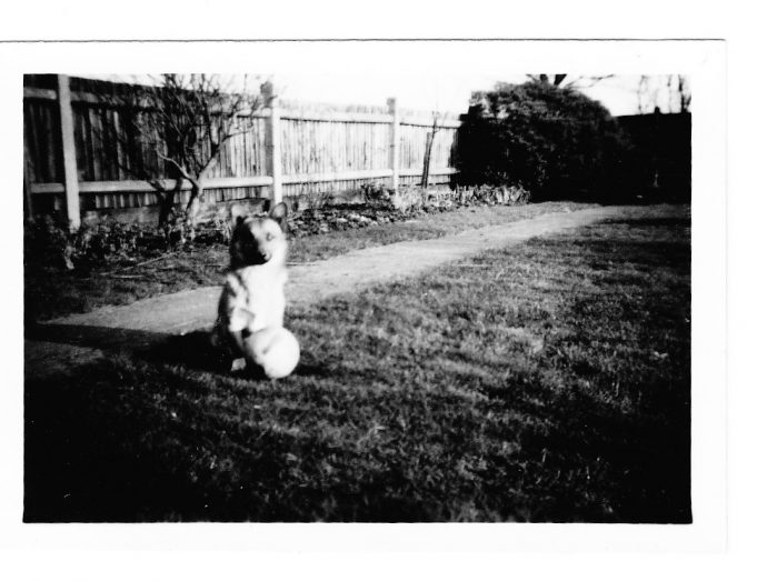 Runwell Hospital's Matron's dog Hamish in Matron's garden. | Dennis Smith