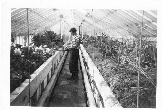 Runwell Hospital greenhouse. | Dennis Smith