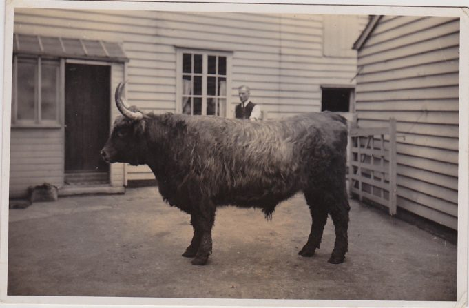 Charlie Simpson and the last bull he slaughtered