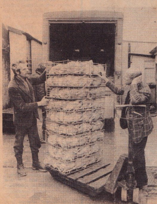 Maurice Marks, right, and his son Leonard, load chickens for delivery (Evening Echo photo).Closure of poultry farm